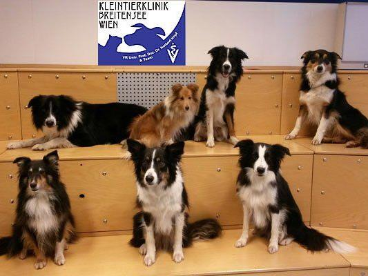 In der Kleintierklinik Breitensee können sich Tierhalter informieren