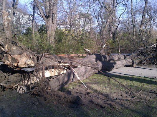 Ein vom Sturm entwurzelter Baum im Wiener Stadtpark