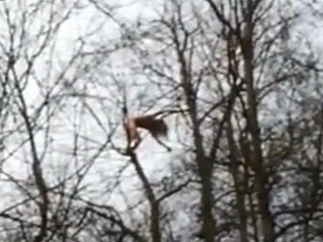 Etwa 30 Meter hoch kletterte der nackte Mann.