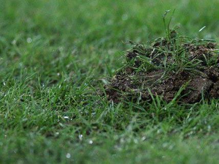 Die Horner haben im Frühjahr noch nicht ihre Form gefunden.