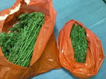 Zehn solcher Plastiksäcke gefüllt mit Marihuana wurden sichergestellt.