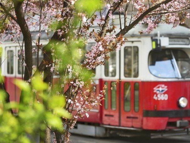 Bim und Bus: Einschränkungen im Öffi-Verkehr beim Vienna City Marathon 2014.