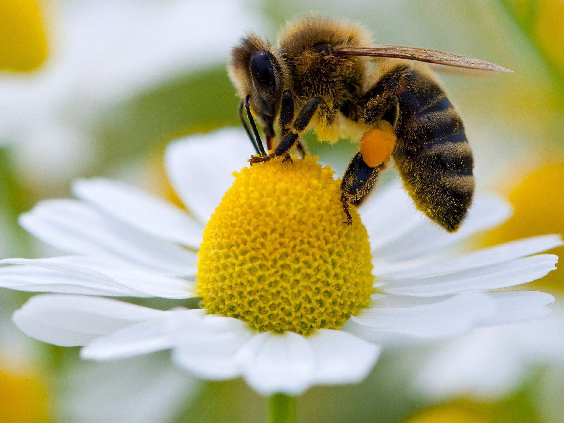 In Wien wurden auf den Friedhöfen zahlreiche Bienenstöcke zerstört.