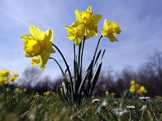 Der Frühling zeigt sich am Wochenende nicht von seiner besten Seite