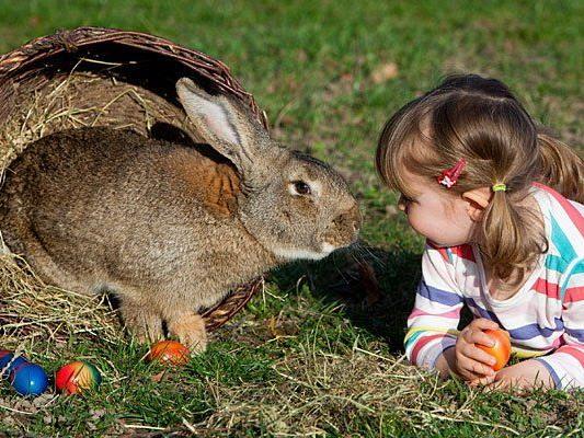 Hasen und viele weitere Tiere können am Landgut Cobenzl gestreichelt werden