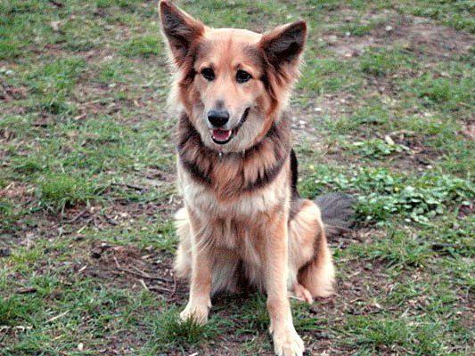 Ein Hund rettete seinen Besitzern das Leben
