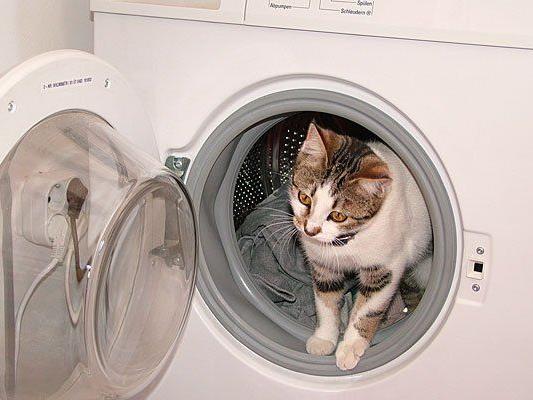 Bei einem Wohnungsbrand in Krems hatte sich eine Katze in die Waschmaschine geflüchtet