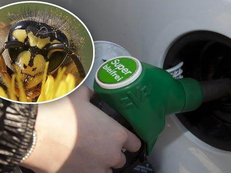 Ein Steirer ging mit einem Feuerzeug während des Tankvorgangs gegen die Wespen am Tankdeckel vor...