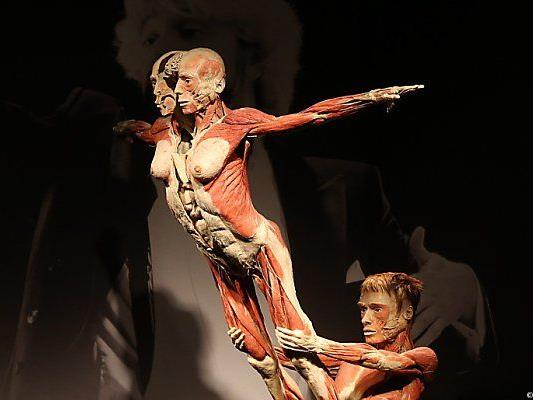 Ein plastiniertes Paar in der Pose von Turnern