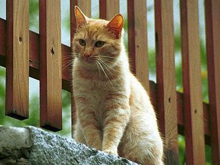 Katze aus Ärger getötet: Schuldspruch in Wiener Neustadt