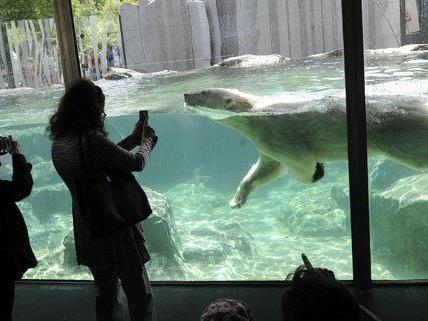 Besucher in der neuen Eisbärenwelt im Tiergarten Schönbrunn.