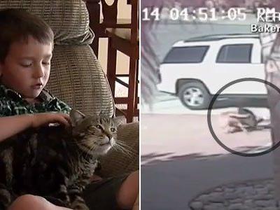 Katze Tara hat den vierjährigen Jeremy vor der Attacke des Nachbarshundes gerettet.