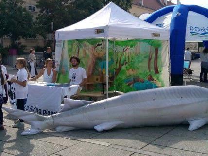 Am 25. Juni findet im Wiener MQ der Danube Day statt.