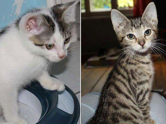 Das sind Wilbur (l.) und sein Schwesterchen Wanda