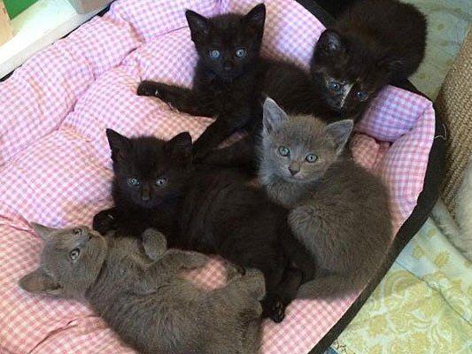 Die süßen Kitten