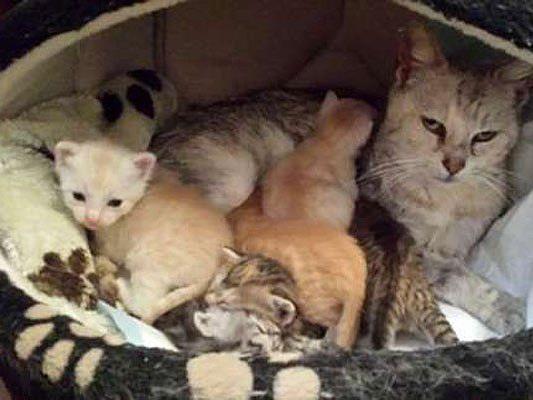 Mama Livia und ihre entzückenden Kitten