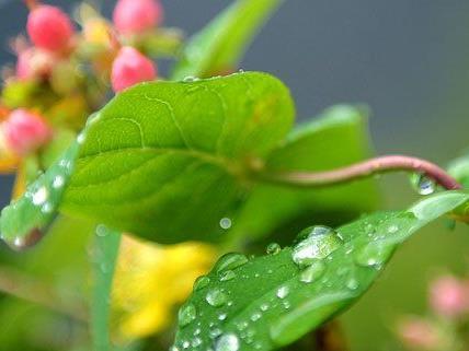 Mit Regen muss am langen Wochenende gerechnet werden.