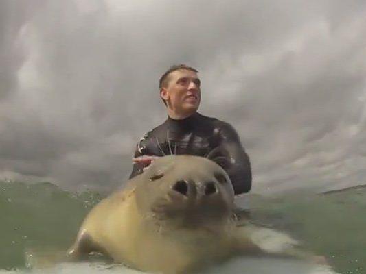 Eine einzigartige Begegnung mit einer Robbe.