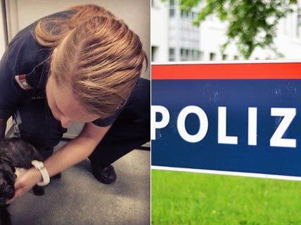 Ein Händler soll Welpen illegal nach Österreich gebracht haben.