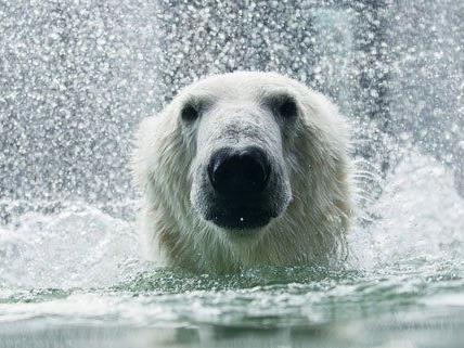Im Wiener Tiergarten finden am 28. bis 31. August die Artenschutztage statt.