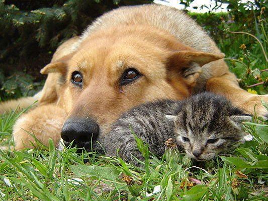 Hunde oder Katze? Für beides gibt es gute Gründe