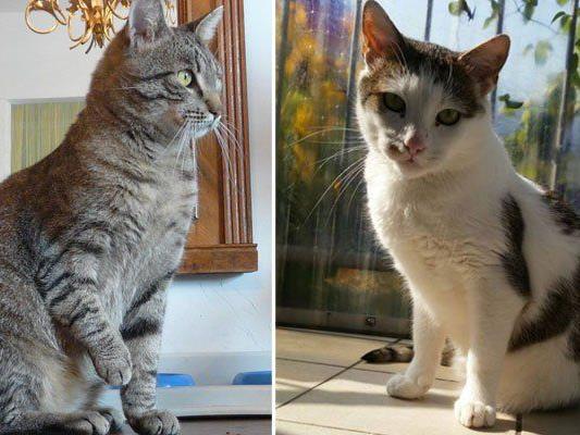 Tiro und William aus dem Wiener Tierplatzerl haben trotz Handicaps jeweils ein tolles neues Zuhause gefunden