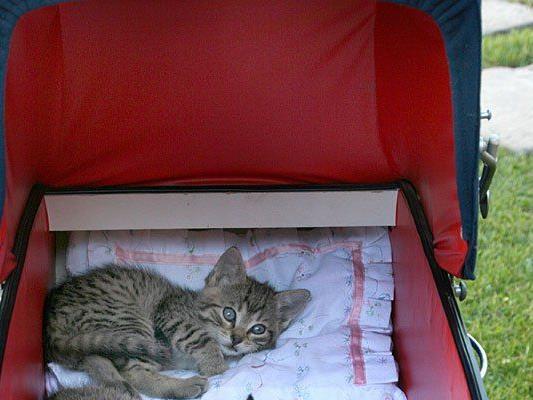 Mitten auf der Straße wurde in Wien-Favoriten versucht, ein Katzenbaby zu verkaufen
