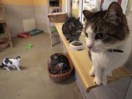 Blick in ein Katzenzimmer des Wiener Tierschutzhauses
