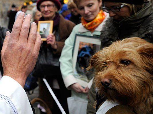 Am Wiener Stephansplatz kann man sich den göttlichen Segen für Hund, Katze und Co. holen