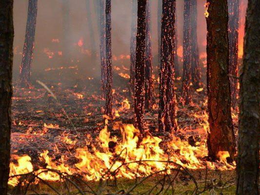 Anzahl der Waldbrände in Europa steigt