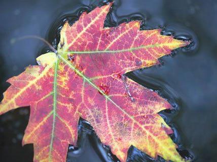 Noch zeigt sich der Herbst in Österreich von seiner milden Seite.