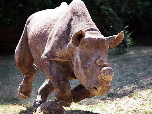 Wilderer sollen entmutigt werden