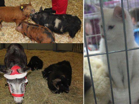 So vielfältig waren die tierischen Besucher der Haustiermesse 2014 in Wien