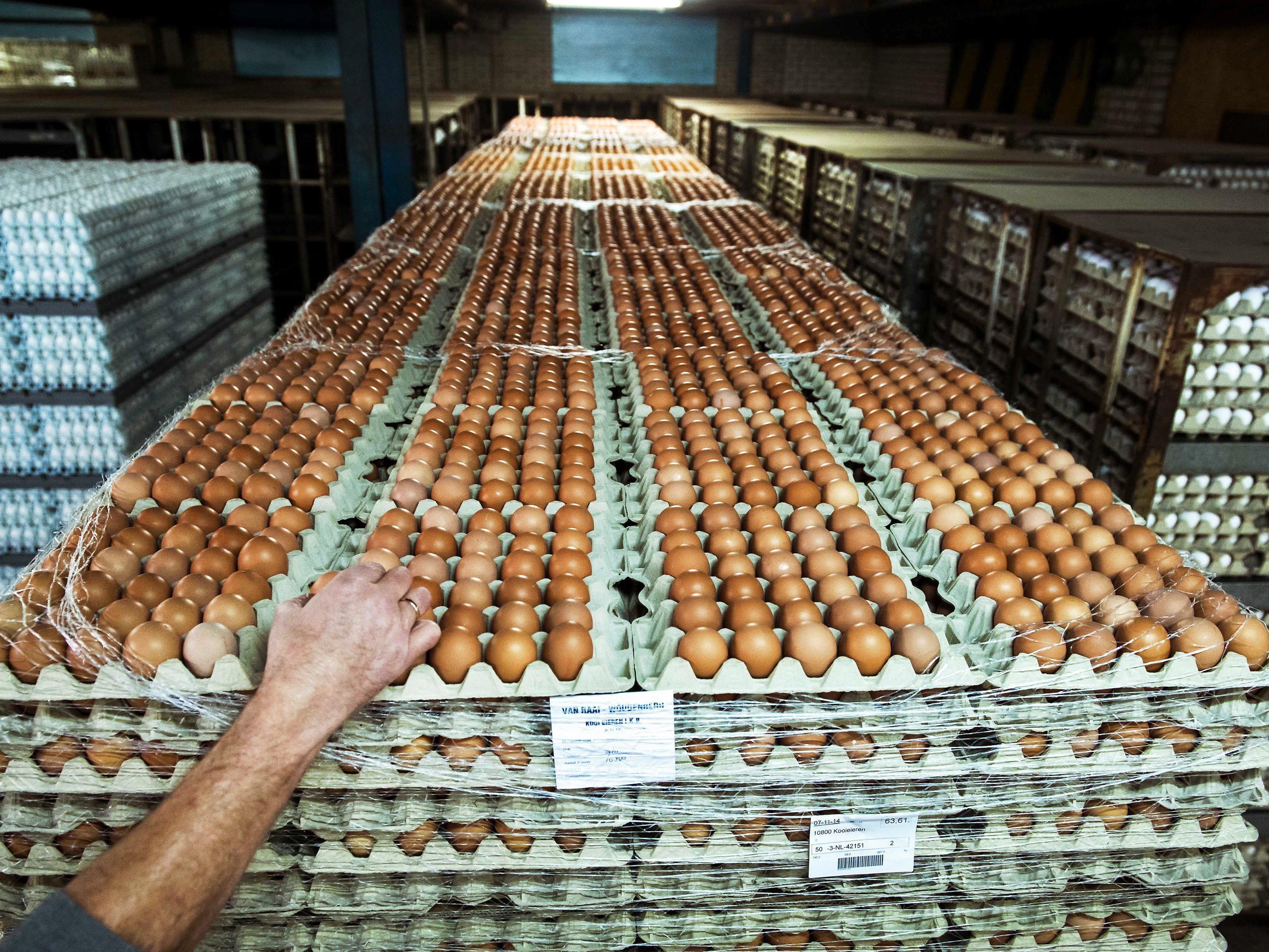 Tausende Hühner werden wegen Vogelgrippe-Verdacht getötet.