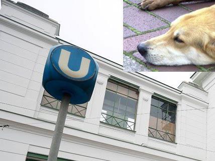 """Hund """"Bubi"""" erlag nach der Attacke seinen Verletzungen."""