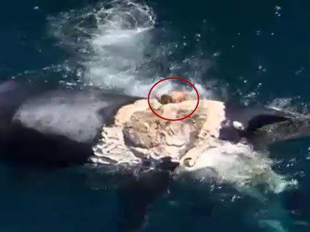 """Kadaver von Haien umringt - """"Idiotische"""" Aktion"""