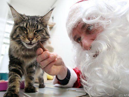 Angst vor dem Kater nach der Weihnachtsfeier