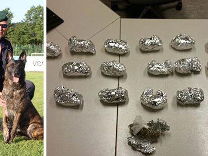 """Polizeihund """"Van Helsing Duivelsbos"""" erschnüffelte das Cannabis"""