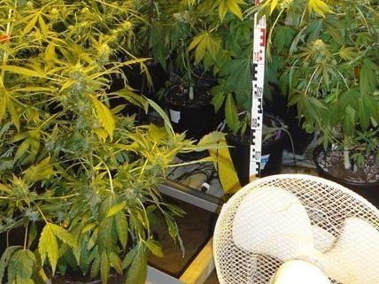 Im 10. Bezirk hat die Polizei 49 Cannabis-Pflanzen sichergestellt.