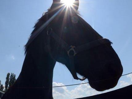 Das Pferd sei wieder auf dem Weg der Besserung.