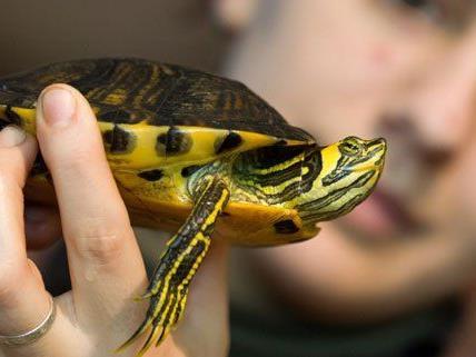 Eine Schildkröte ist kein Kinderspielzeug.