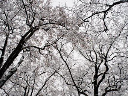 Erster Schneefall sorgt in Wien für viel Arbeit für die Mitarbeiter der MA48.