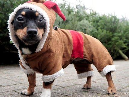 Besonders warm anziehen muss man sich und seine Lieben am 24. Dezember nicht.