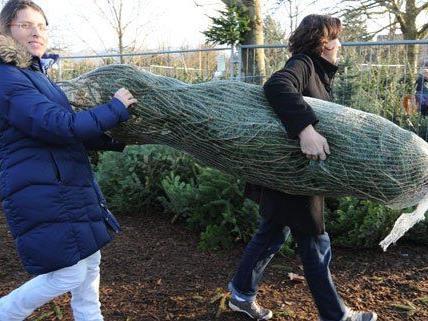 Am dem 12. Dezember kann man in Wien Christbäume kaufen.