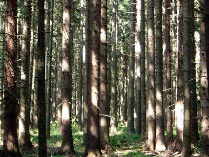 Der Vater hatte seinen Sohn (6) im Wald aus den Augen verloren.