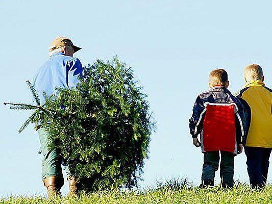 Nach den Feiertagen kann man den Christbaum entweder entsorgen - oder auf sportliche Art werfen