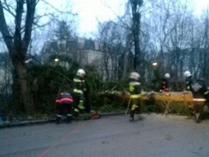 In Wien-Hietzing gab es einen Sturmbedingten Feuerwehreinsatz.
