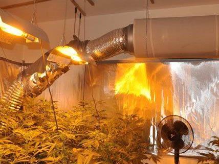 Diese Cannabis-Plantage wurde am Samstag in Wien entdeckt.