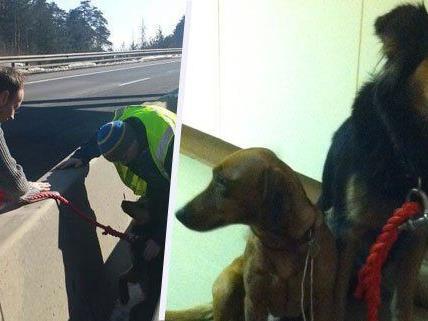 Diese beiden Hunde waren entlaufen und wurden auf der A2 gefasst.