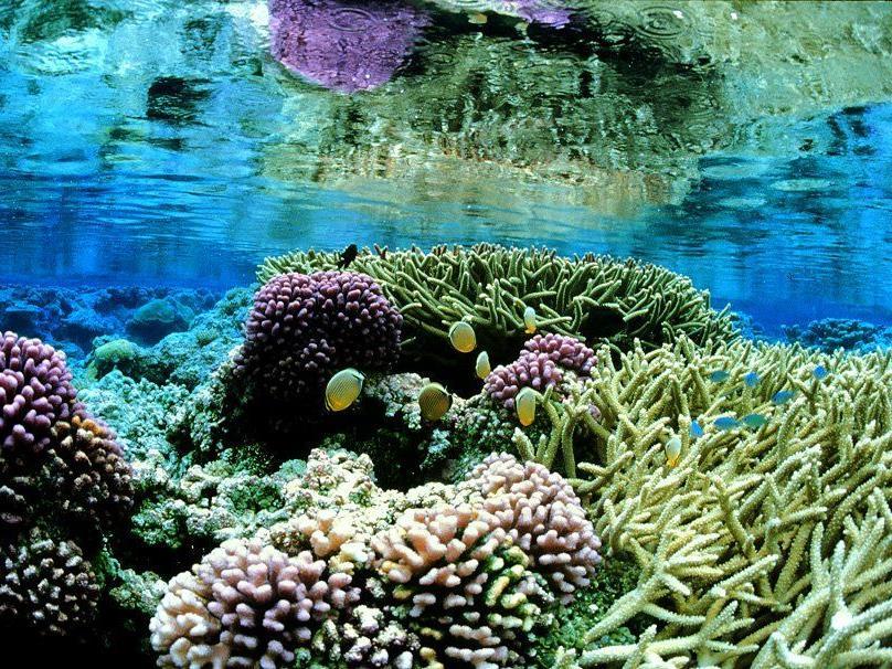 Die Ozeanversauerung setzt Meeresbewohnern zu. Im Bild: Ein intaktes Korallenriff auf dem Palmyra Atoll im Pazifik.